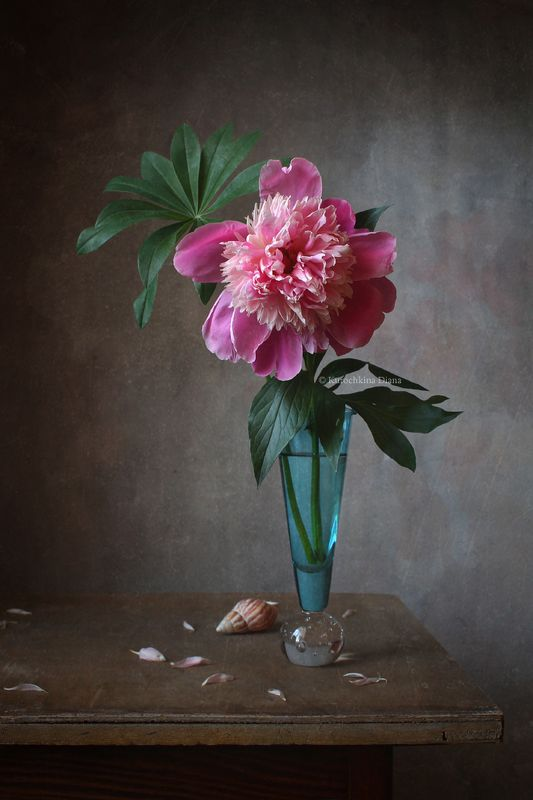 натюрморт, цветы, пион, розовый пион Розовый пионphoto preview