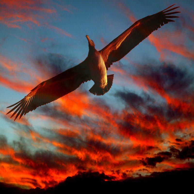 Перспектива в небе О птичках фото превью