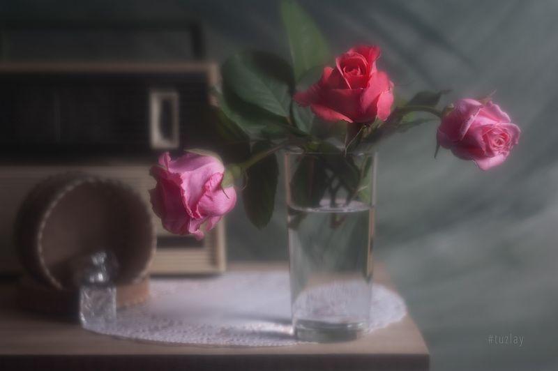 розы, спидола Ах эти розочки!photo preview