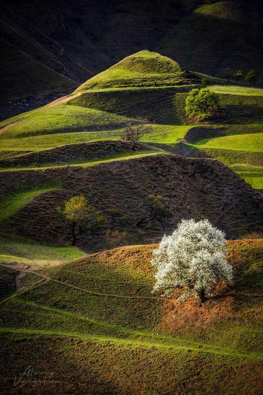 dagestan, outdoor, landscape, white, tree, green Невестаphoto preview