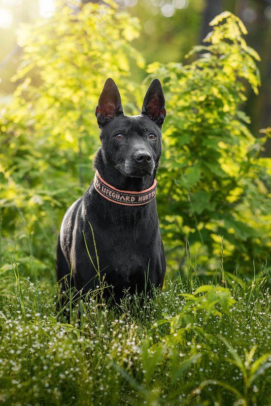 собака, животное Тэраphoto preview