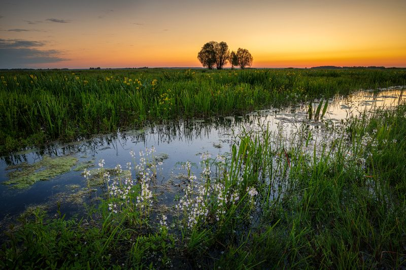 nature, landscape, colors, sunrise, river, biebrza Sunrise in Biały Grąd in Biebrza National Parkphoto preview
