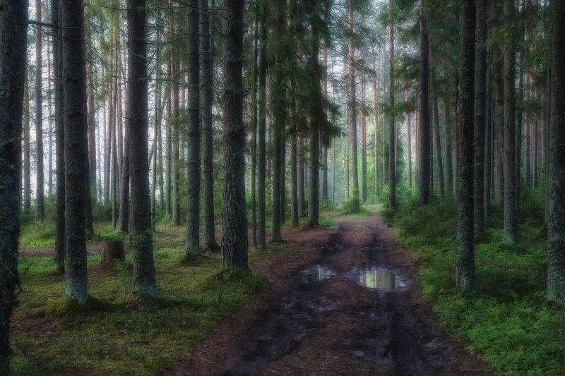 Дорога в таинственном лесуphoto preview
