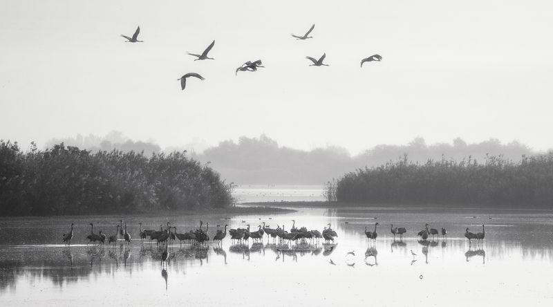Crane Morning фото превью