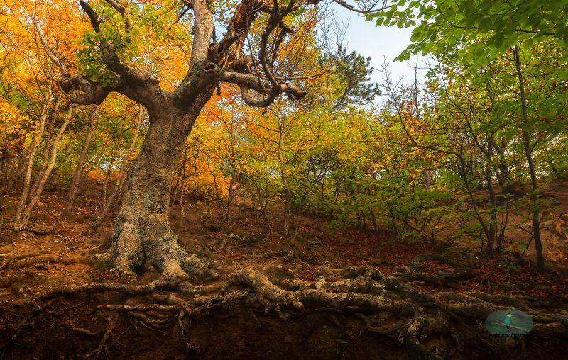 #35photo Тропами осеннего Демерджиphoto preview