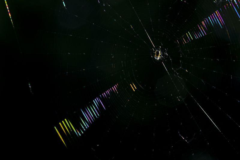 природа, свет, контровой свет, паутина, паук Паутина в контровом светеphoto preview