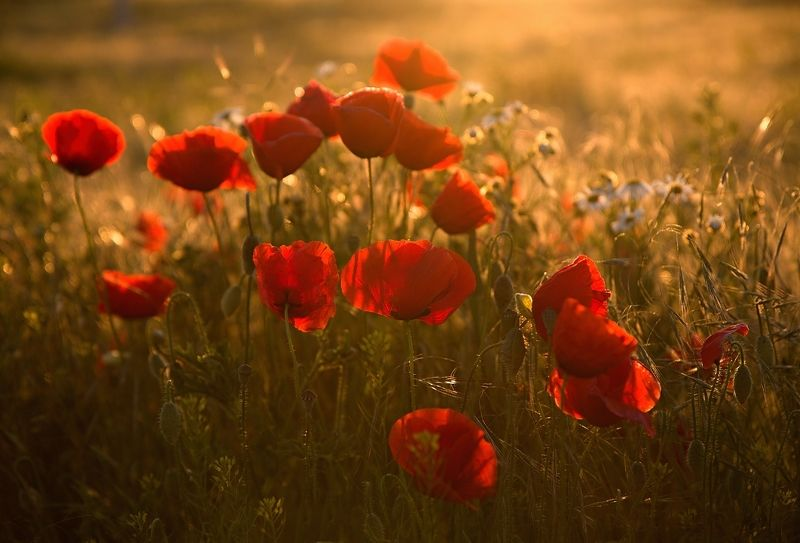 When it blooms in Moravia (That\'s worth it)photo preview