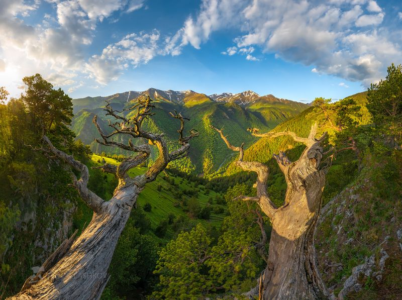 северный кавказ, горы, гора, архыз, хребет, горное, сосна, сосны, лес, деревья, лесное, дерево, ствол, путешествие, туризм, скалы, Сосны Архызаphoto preview