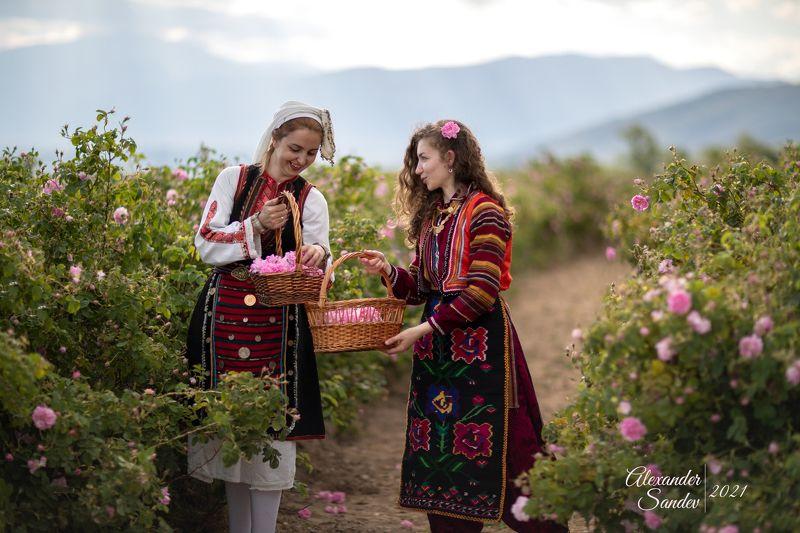сбор, роз, в, болгарии Сбор роз в Болгарии - Фото пены Tamronphoto preview