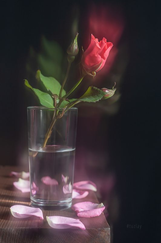 роза, блюр, софт эффект Никакой магии from Photoshop...photo preview
