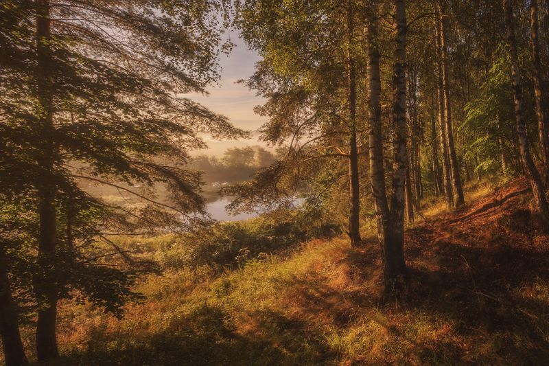 озеро, горы, лес, природа, закат, рассвет, красота, приключения, путешествие, облака, урал Утро в березовом лесуphoto preview
