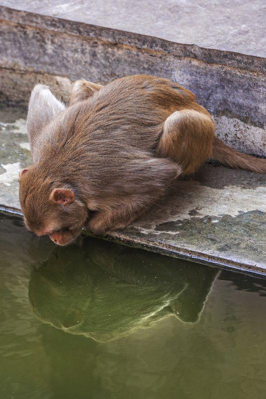 индия, храм, обезьяны Я ль на свете всех милее?photo preview