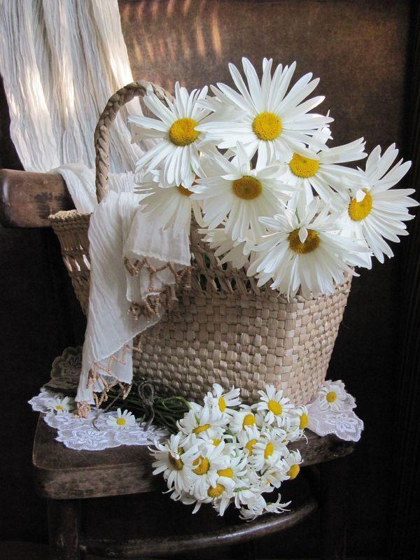 цветы, букет. ромашки. корзинка, стул. шарф, салфетка Наташкины ромашкиphoto preview