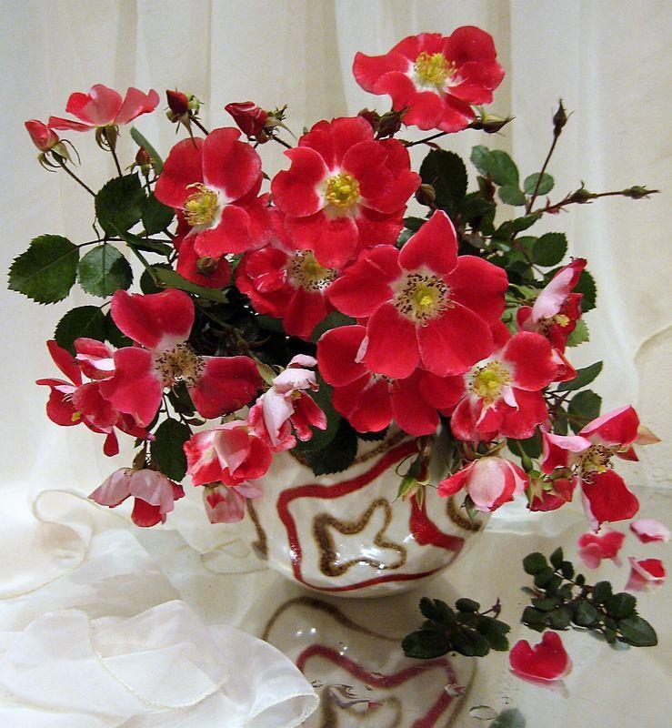 цветы. букет, розы Любимые розочкиphoto preview