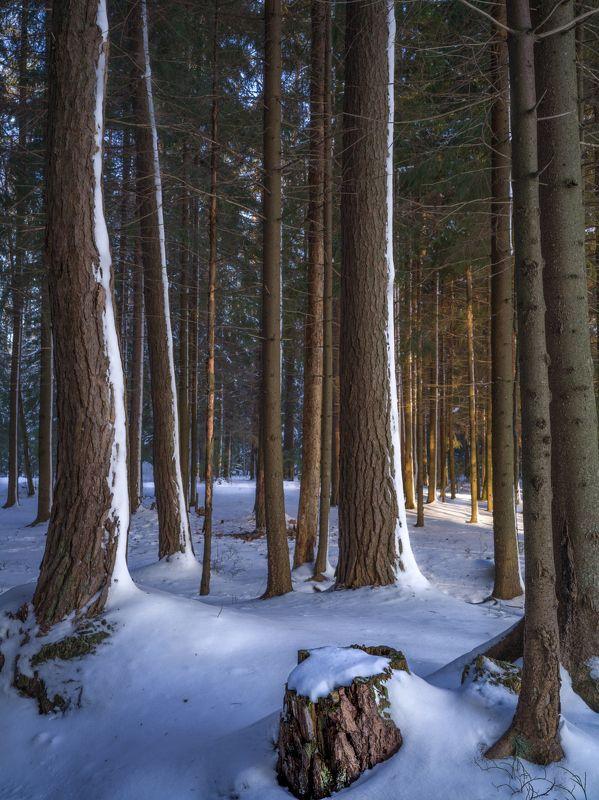 сосны, зима ***photo preview