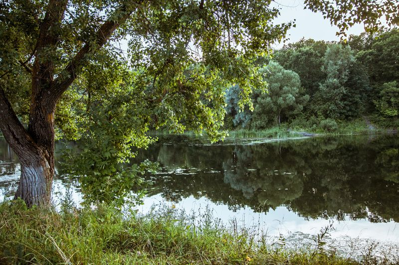 Река, деревья, спокойствие Тишинаphoto preview