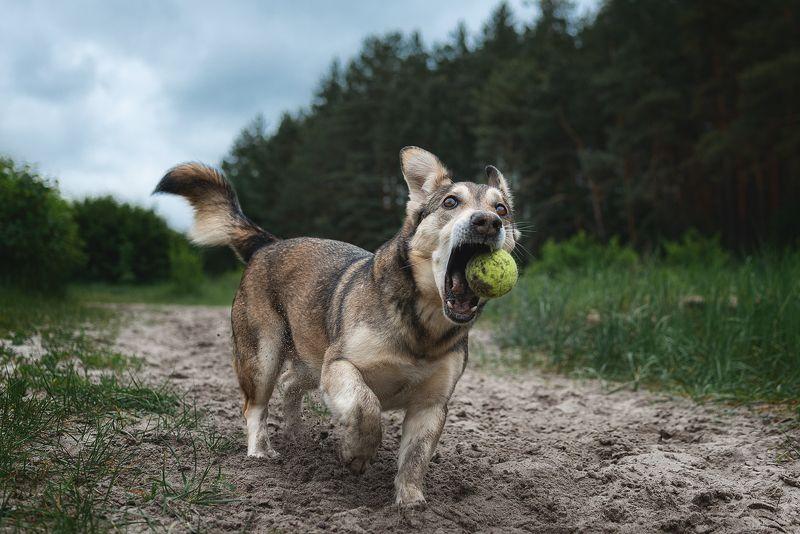 собака, животное, dog, Драйвphoto preview