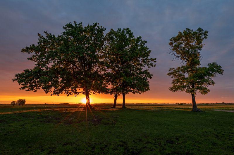 nature, landscape, colors, sunset, biebrza, photo preview