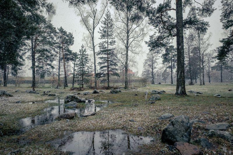 приозерск, корела, крепость, снег, деревья, лужа, камни, пейзаж, природа Майский снегphoto preview