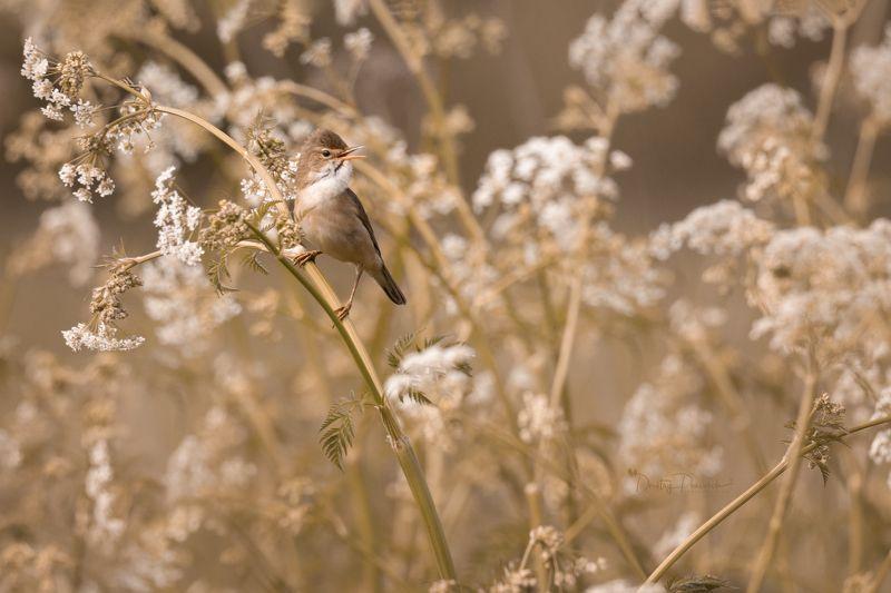 природа, лес, поля, огороды, животные, птицы, макро Радости жизниphoto preview