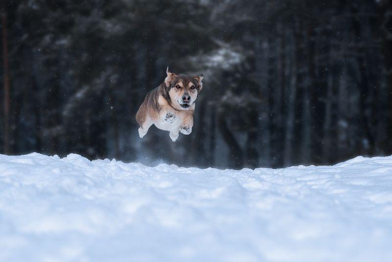 собака, животное Полёт Уокераphoto preview