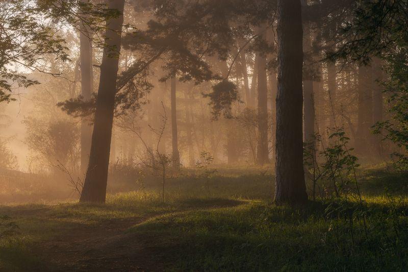 пейзаж, туман, природа, лес, Московская область, рассвет Утро в лесуphoto preview