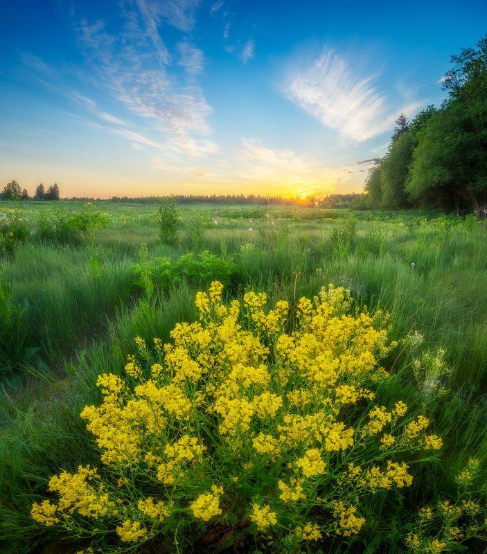 ленобласть, лето, восход, поле ***photo preview