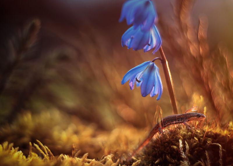 тритон макро природа лес мох закат Тритончикphoto preview