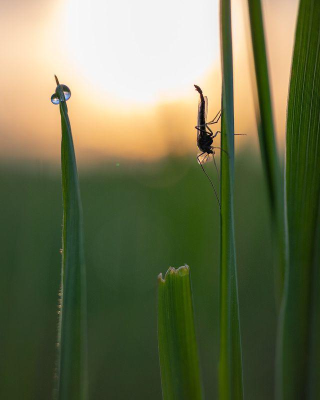 В комарином царстве 2photo preview