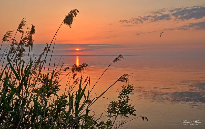 утро, рассвет, восход, небо, облака, дорожка Спокойствие утраphoto preview