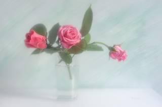 Про розы в светлом