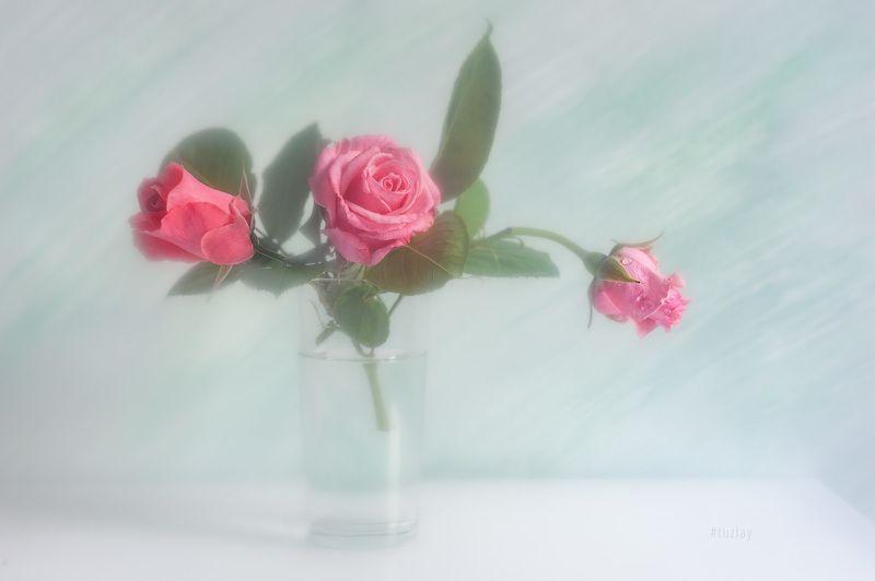 розы Про розы в светломphoto preview