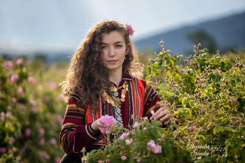 Сбор роз в Болгарии - Фото пены Tamronphoto preview