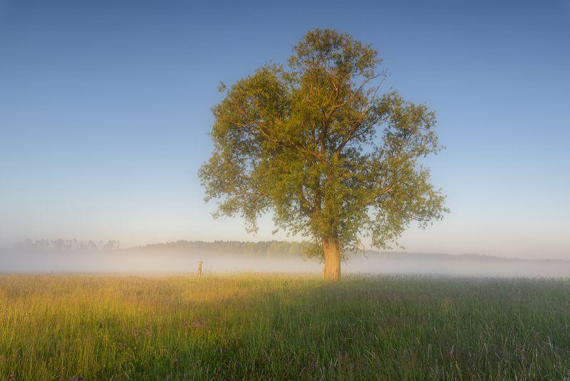 trees, morning  фото превью