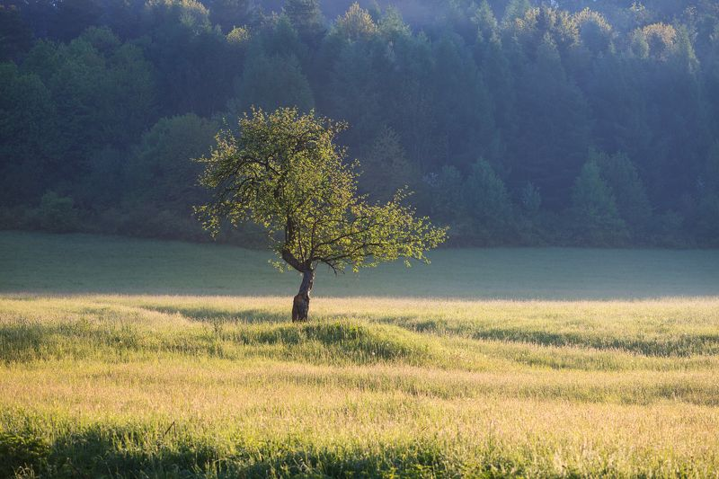 bieszczady, spring, mountains, green, sky, fog, morning, lanscape, tree ***photo preview