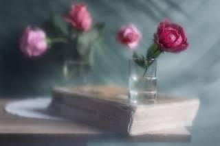 Про книгу с розами