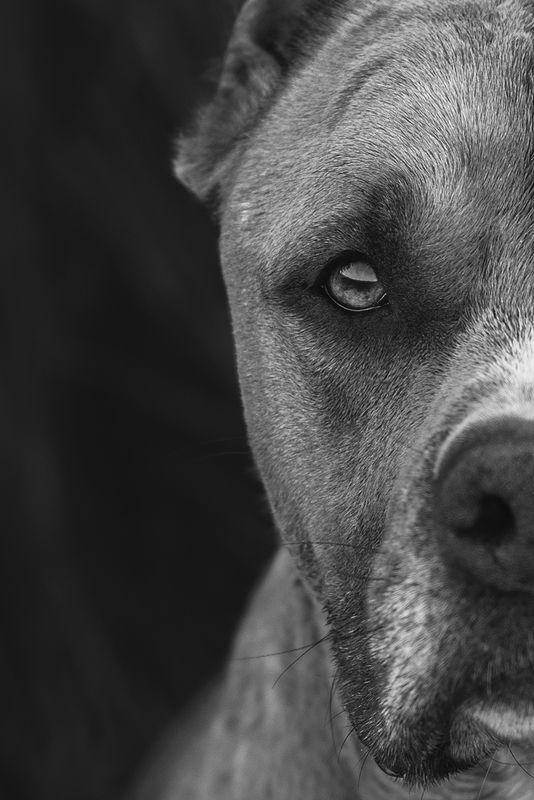 собака, животное, dog, стафф Сосредоточенностьphoto preview