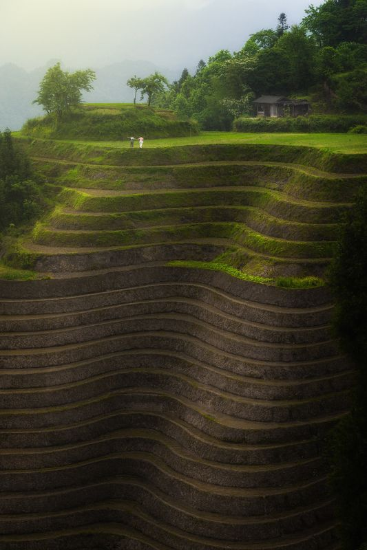 landscape, china, guilin, rice fields, A Piece of Happinessphoto preview