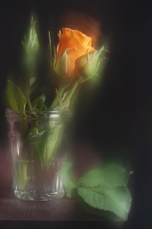 розы, желтая роза Немного жёлтеньким разбавить тоже можноphoto preview