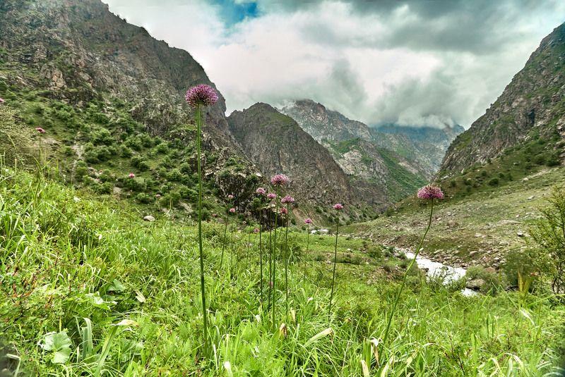 Прогулки по Сиаме… Цветет горный лук - анзур. Варзоб. Таджикистанphoto preview