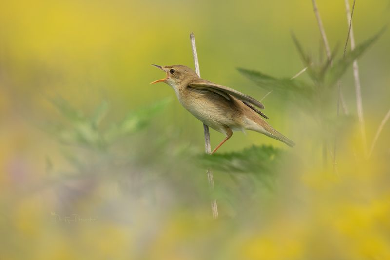 природа, лес, поля, огороды, животные, птицы, макро С праздничком !!!photo preview