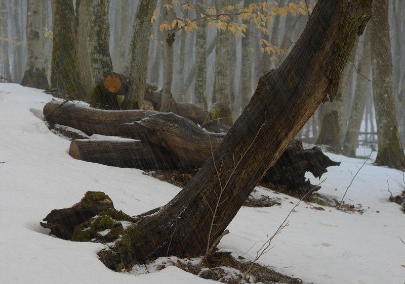 зима туман лес утро А снег идет...photo preview