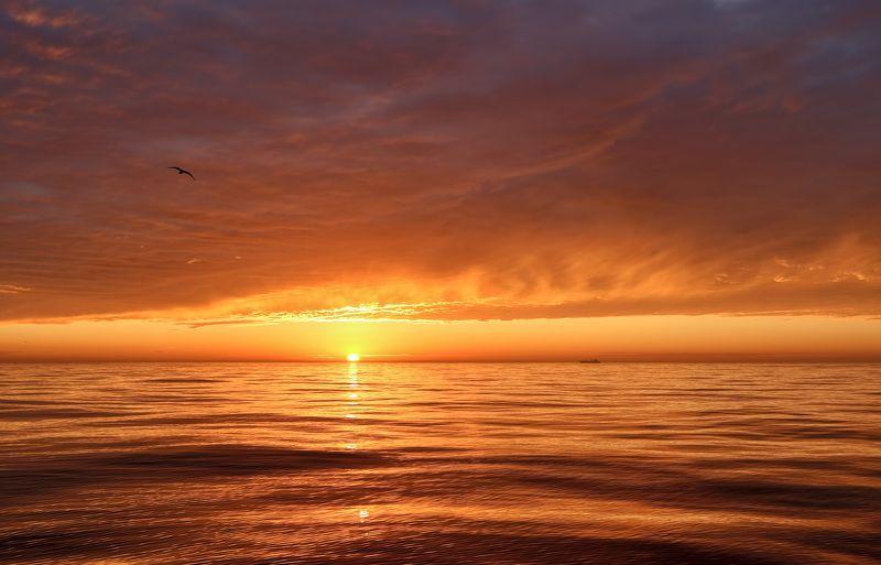 вечер, закат, судно, чайка, штиль, охотское море солнечный ветерphoto preview