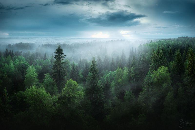 лес, деревья, пасмурно, с дрона, сверху, аэросъемка, вечер, облачно, дождливо, панорама, калуга, россия, dji, mavic 2 pro, aerial, from above Вечерний лес после дождя фото превью