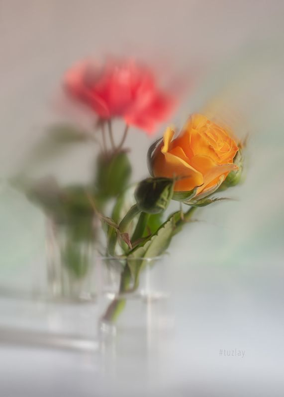 жёлтая роза, розы Жёлто-розовая фантазияphoto preview