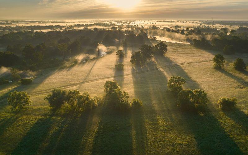 #light #sun #shadows #tree Morning фото превью