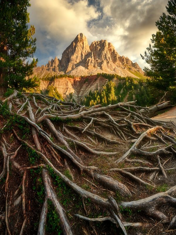 dolomites,italy The rootsphoto preview