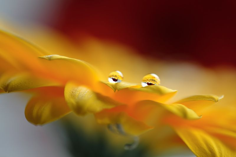 капли, макро, свет, цветы - мы наблюдаем за вами!!!photo preview