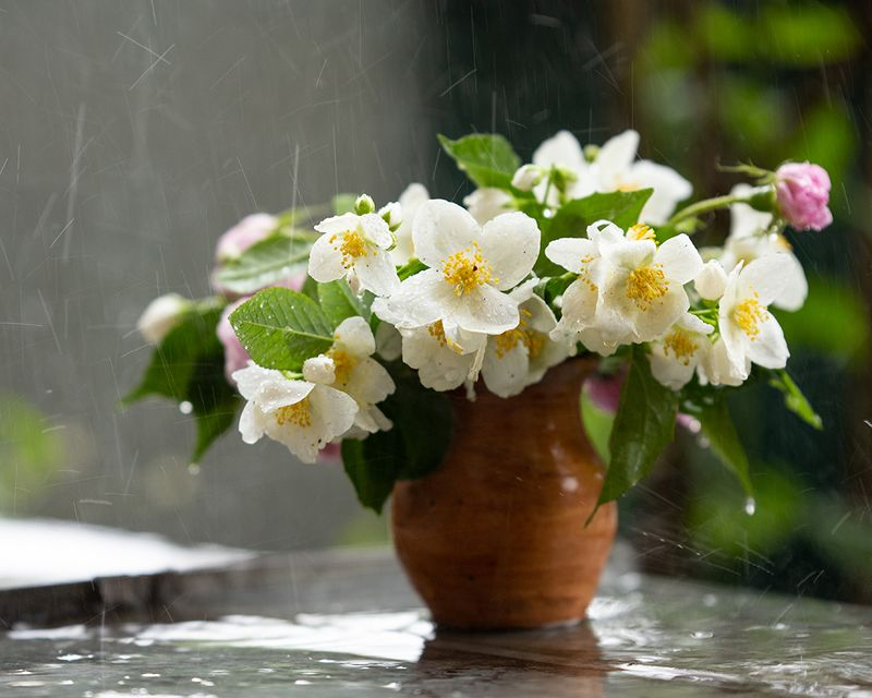 Просто летний дождь пошел...photo preview