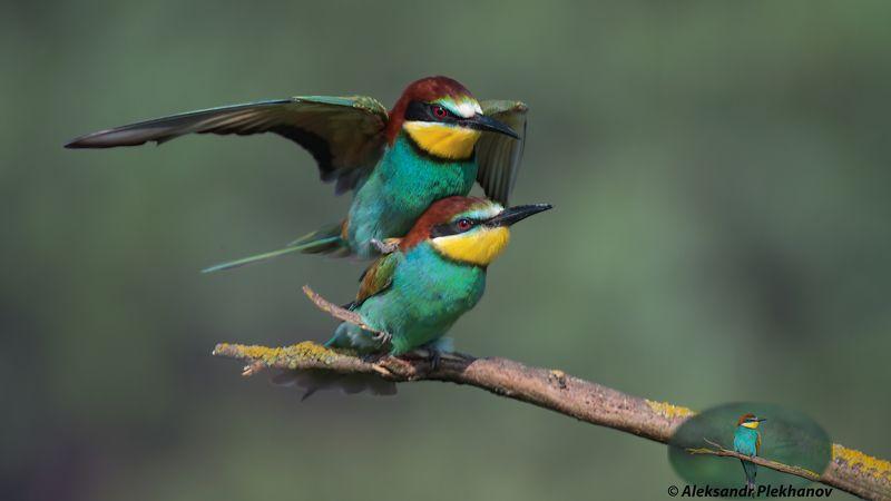 wildlife Крылья любвиphoto preview